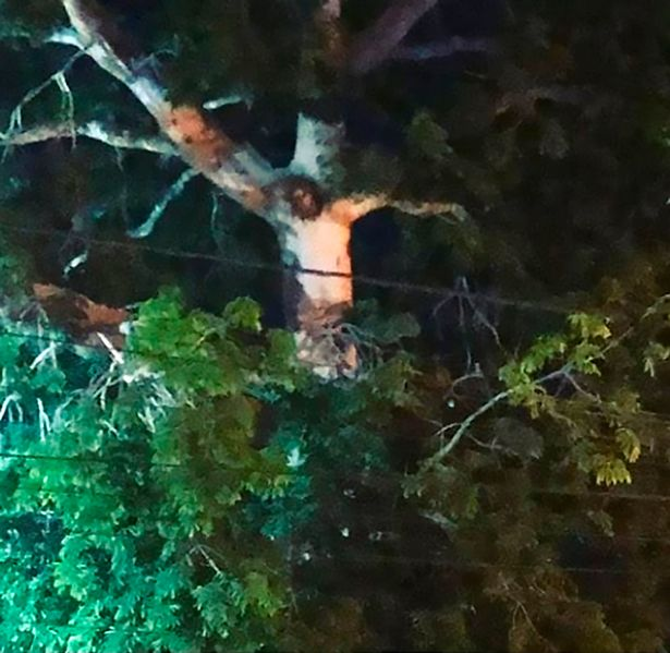"""The """"Tree of Jesus"""" was discovered in Colombia. A Divine sign? 2"""
