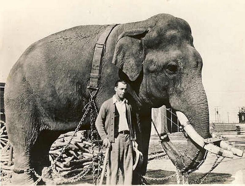 Elephant under LSD