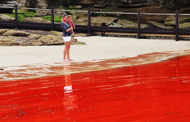 Rivers, ponds and even rains turn red all over the world 4