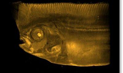 A rare deep-sea fish caught in the net near the island of Imizu, Japan 98