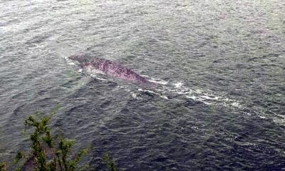 A Briton captured on camera a creature similar to the Loch Ness monster 39