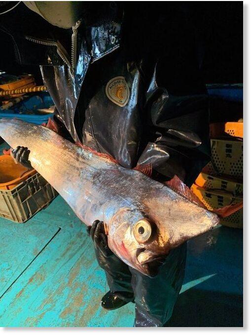 A rare deep-sea fish caught in the net near the island of Imizu, Japan 2