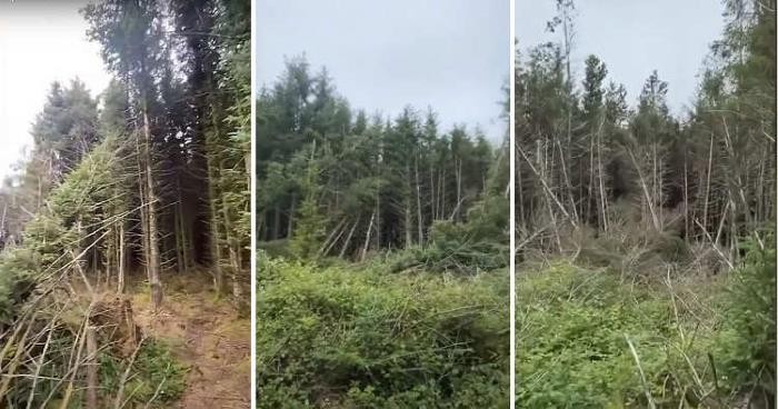 A Man Discovered A UFO Landing Site In A Forest And Heard Strange Screams 39