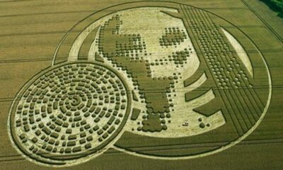'Alien' message creativity. What the crop circles really hide 95
