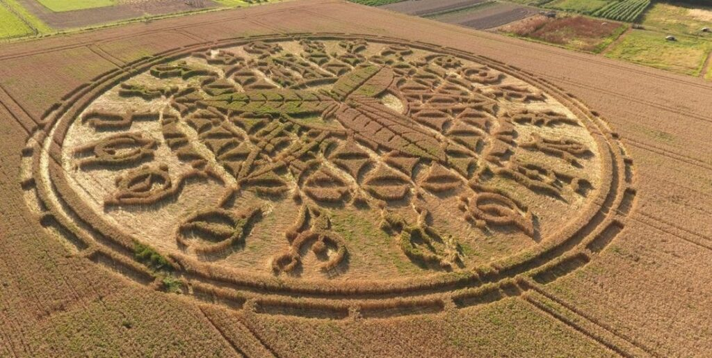 'Alien' message creativity. What the crop circles really hide 15