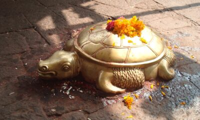 A golden turtle was found in Nepal. She is compared to the incarnation of Vishnu 87