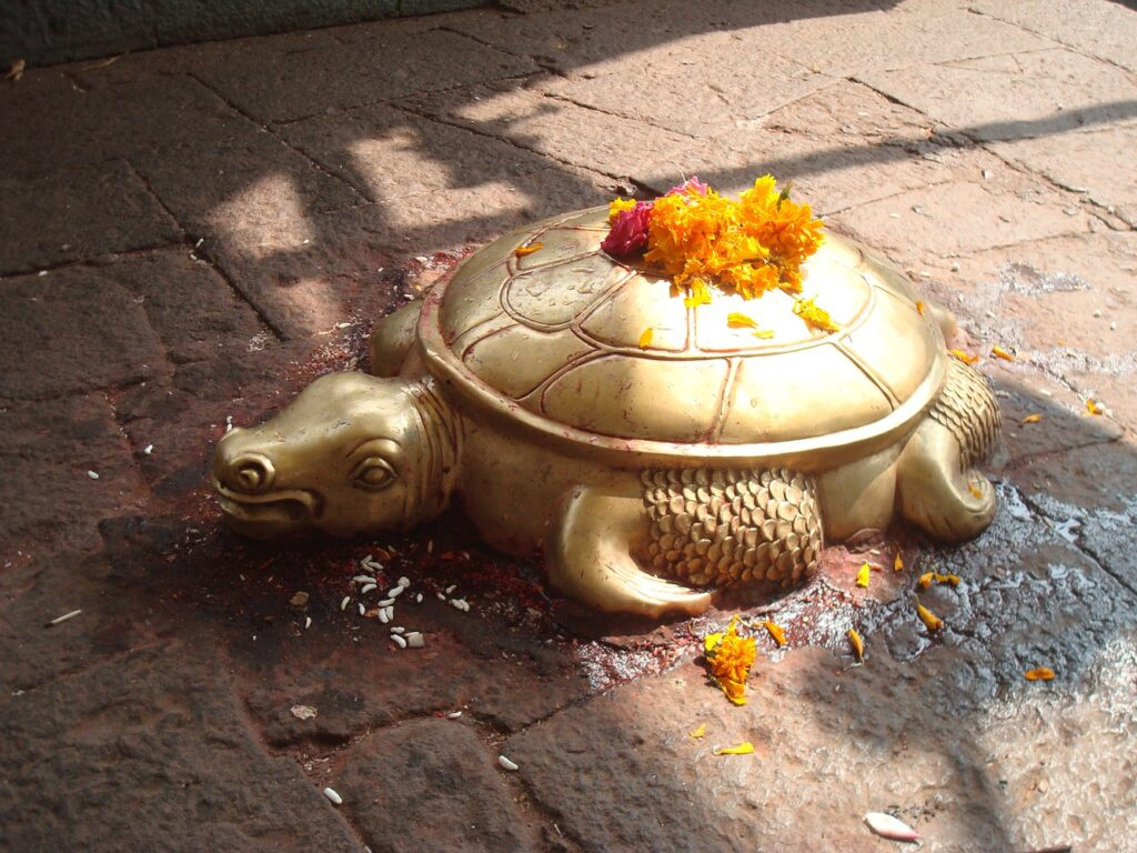 A golden turtle was found in Nepal. She is compared to the incarnation of Vishnu 8