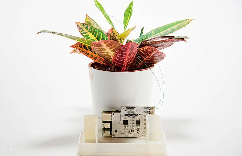 The Secret Life of Plants: They Hear, Communicate and Scream 87