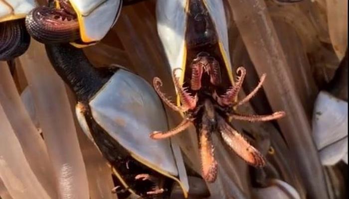 A tourist found a thousand-legged creepy beast washed up on the coast of Wales 86