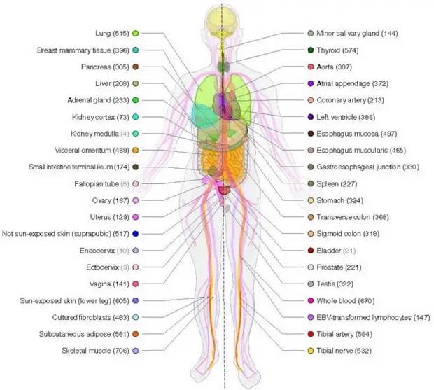 Genes work differently in men and women 87