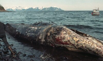 The world's oceans are under attack from man-made disasters 87