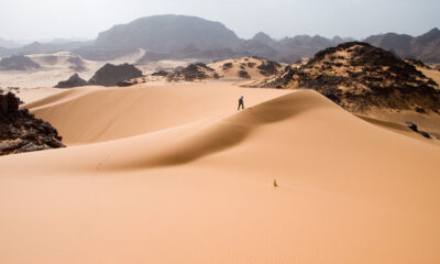 More than a billion trees found in and around the Sahara 105