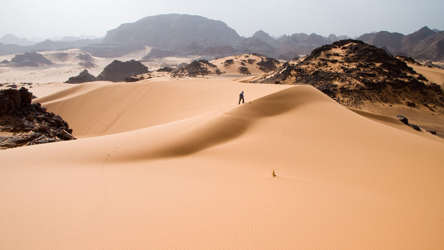 More than a billion trees found in and around the Sahara 24