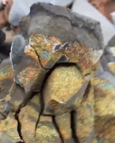 A Russian guy smashed a dinosaur egg on camera and showed everyone what is inside (video) 102