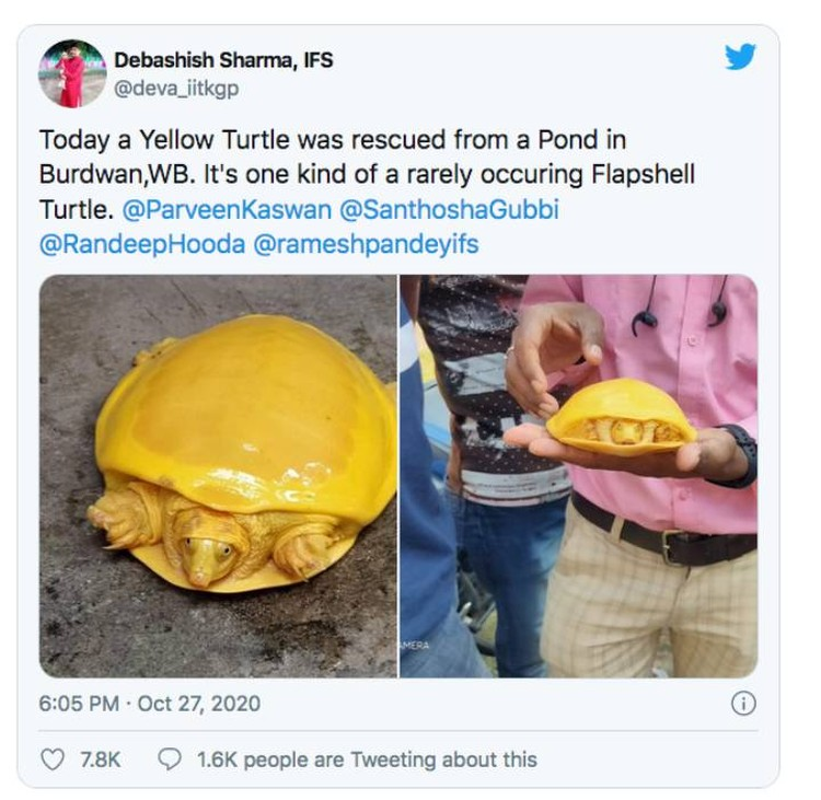 Messages about yellow turtles began to appear on social networks.