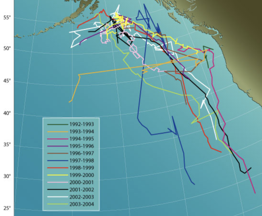 "Migration map of a sound source identified as a ""fifty-two hertz whale"" / Woods Hole Oceanographic Institution"