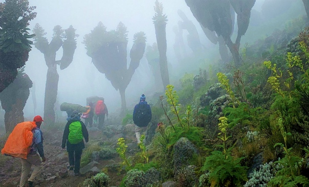 A prehistoric forest that grew on earth a million years ago was found on the slope of Kilimanjaro 110