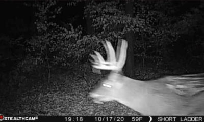 "Trap camera filmed a ""zombie deer"" in Illinois 24"
