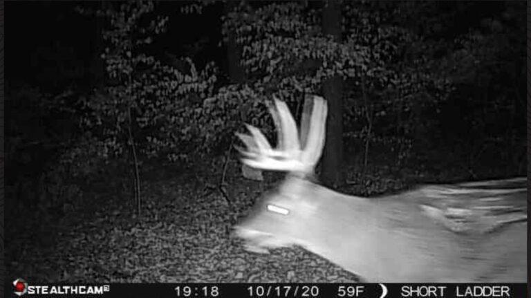 "Trap camera filmed a ""zombie deer"" in Illinois 1"