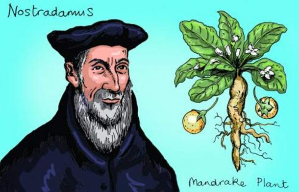 An amazing cookbook by Nostradamus. Why the alchemist treated plague and impotence with jam 5