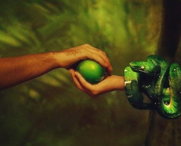 """Was there an apple? Scientists are finding out what could be the """"forbidden fruit"""" of Eden 2"""