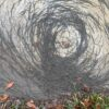For some unknown reason, Hundreds Of Earthworms began to move in a spiral as they were planning to take over the world 14