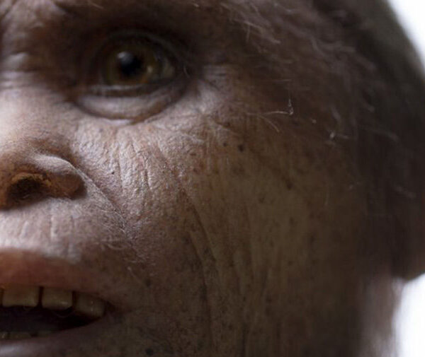 "Hobbits were real: Scientists believe that ""goblins"" are relatives of modern humans 3"