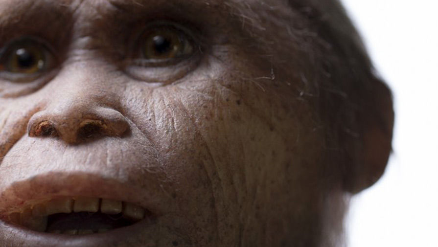 """Hobbits were real: Scientists believe that """"goblins"""" are relatives of modern humans 1"""