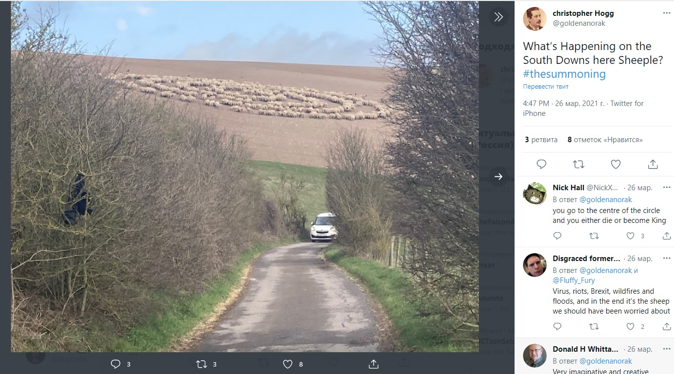 No crop circles and UFO tracks? Hundreds of sheep for no apparent reason walked in circles in a British field 3