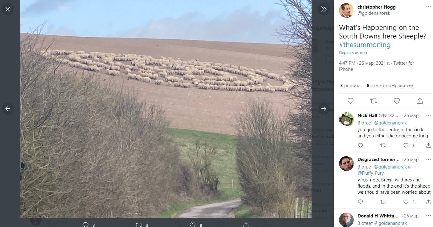 No crop circles and UFO tracks? Hundreds of sheep for no apparent reason walked in circles in a British field 4