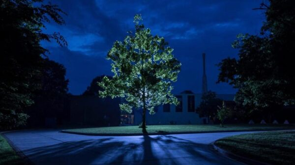 """Scientists are looking for """"moon trees"""" grown from seeds that have been on board the """"Apollo 14"""" 15"""