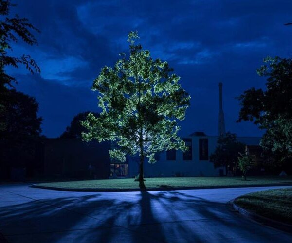 """Scientists are looking for """"moon trees"""" grown from seeds that have been on board the """"Apollo 14"""" 2"""