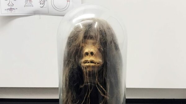 "The fake dried head from the ""Wise Blood"" horror movie turned out to be a real shriveled head 8"