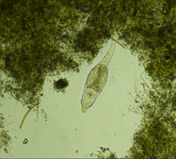 Organisms from the Siberian Permafrost came to life after 24 thousand years and began to actively multiply 3