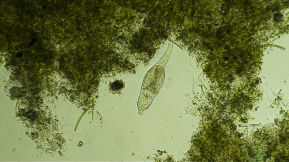 Organisms from the Siberian Permafrost came to life after 24 thousand years and began to actively multiply 1